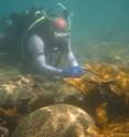 Coraloffpuer