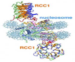 Protein_Dna_Binding
