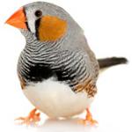 Fossil-virus-bird
