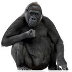 Malaria-gorilla-origin