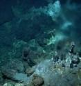 New deep-sea