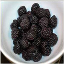 Black-Raspberries-Highly-Ef