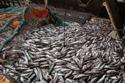 Fisheries-health