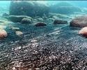 Listening-for-ocean-spills
